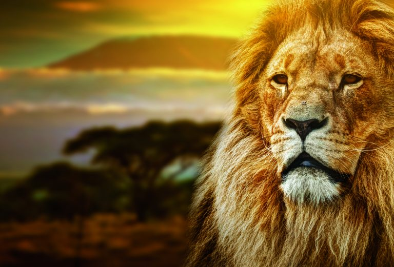 Gestion en ligne pour les lions clubs.